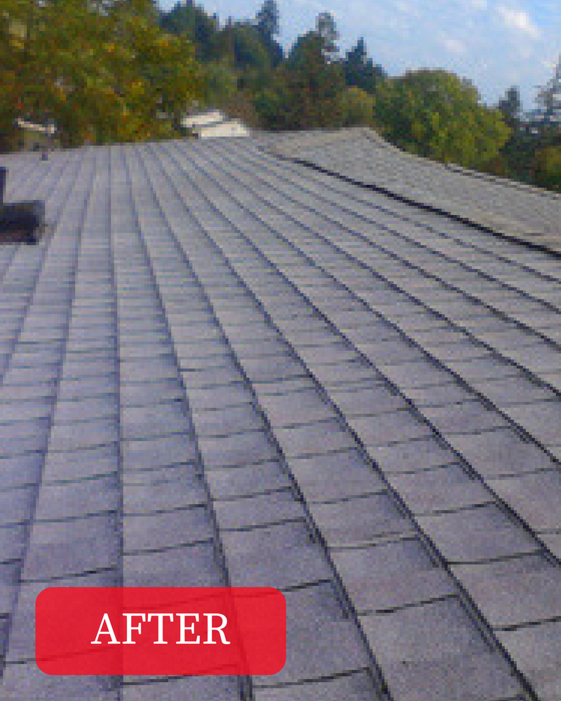 Eugene S Best Roof Cleaning Amp Moss Removal Company